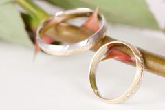 Wedding rings on thorns Royalty Free Stock Photos