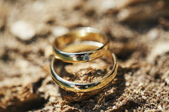 Wedding rings on tree bark Royalty Free Stock Photo