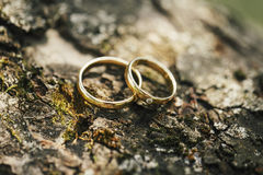 Wedding rings on tree bark Stock Images