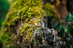 Wedding rings on a tree bark Royalty Free Stock Photography
