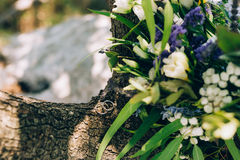 Wedding rings on a tree bark Royalty Free Stock Image