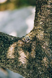 Wedding rings on a tree bark Stock Images