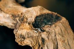 Wedding rings on a tree bark Stock Photo