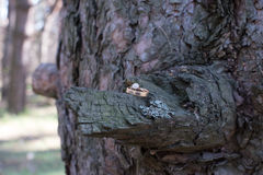 Wedding rings on a tree bark. Stock Photo