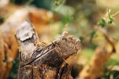 Wedding rings on a tree bark Royalty Free Stock Photos