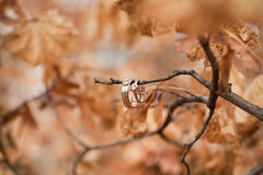 Wedding rings on tree branch Royalty Free Stock Images