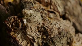 Wedding rings on the tree stock footage