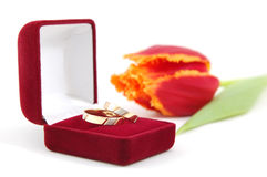Wedding Rings and Tulip. Red velvet box with two gold wedding bands in front of a red tulip Royalty Free Stock Photos