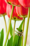 Wedding rings on a tulip sheet Royalty Free Stock Photos