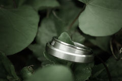 Wedding rings. Two rings,wedding rings Love concept Royalty Free Stock Photography
