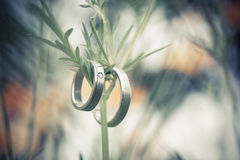 Wedding rings. Two rings,wedding rings Love concept Royalty Free Stock Images