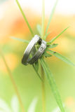Wedding rings. Two rings,wedding rings Love concept Stock Photo