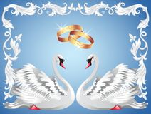 Wedding rings and two swans Royalty Free Stock Photography
