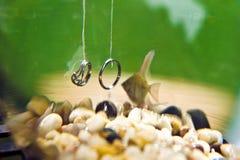 Wedding rings underwater in an aquarium Royalty Free Stock Photo
