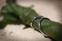Wedding rings on a vine leaf Royalty Free Stock Photo