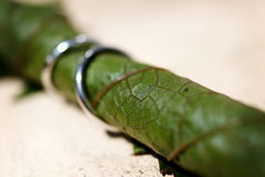 Wedding rings on a vine leaf Royalty Free Stock Images