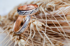 Wedding rings on the wheat Stock Photos