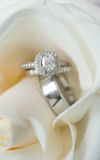 Wedding rings in white flower Royalty Free Stock Images