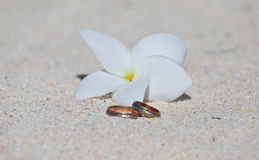 Wedding rings with white flower Stock Photos