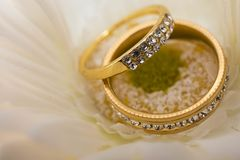 Wedding rings in white flowers royalty free stock images