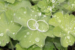 Wedding rings in white gold on green leaf Royalty Free Stock Photography