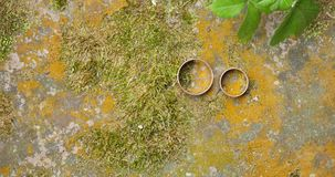 Wedding rings of white gold on a stone on a background of green moss stock video footage
