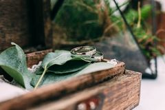 Wedding rings from white gold in a wooden box filled with moss,. Greenery and grass. Details and decor of rustic ceremony Stock Images