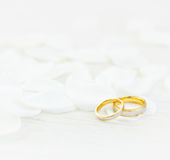 Wedding rings. And white petals Stock Photos