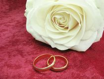 Wedding rings and white rose on red velvet Royalty Free Stock Photography