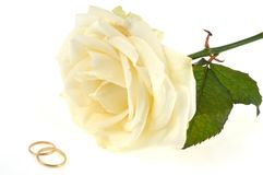 Wedding rings and white rose on a white background royalty free stock image