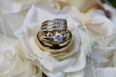 Wedding rings. In white roses Stock Image