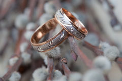 Wedding rings on the willow branch.  Stock Photo