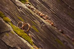 Wedding rings. On wood. Shallow depth of field Stock Images