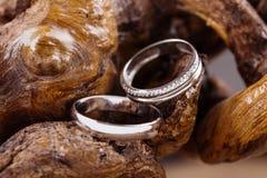 Wedding rings on wood Stock Photo