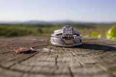 Wedding rings on a wooden log in a vineyard. In the mountains Royalty Free Stock Images