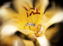 Wedding rings in the yellow flower Royalty Free Stock Images
