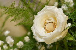 Wedding rings in yellow rose Royalty Free Stock Photography