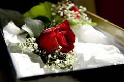 Wedding Rose. A close-up of a red rose corsage in a box Stock Image
