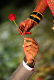 Wedding Rose Royalty Free Stock Photo