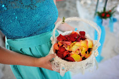 Wedding rose petals at hands Royalty Free Stock Photography
