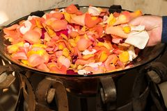 Wedding rose petals tossing Royalty Free Stock Photos