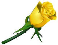 Wedding Rose Yellow. High detailed illustration Stock Photos