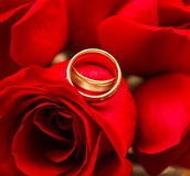 Wedding Rose02. Wedding rings on a beautiful bright red rose Stock Photos