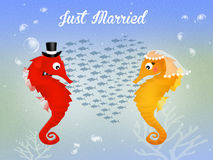 Wedding of seahorses Stock Photos