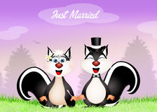 Wedding of skunks Stock Photos