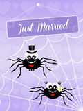 Wedding of spiders Royalty Free Stock Images
