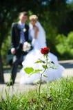 Wedding stieg Stockfoto