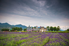 Wedding studios in Lavender Fields Stock Image