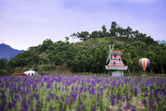 Wedding studios in Lavender Fields Stock Photo