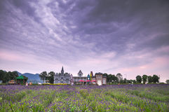 Wedding studios in Lavender Fields Royalty Free Stock Photography